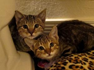 lucy's kittens at Rue de la Marguerite sanctuary
