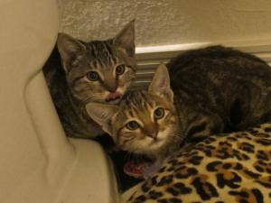 lucy's kittens at Rue de la Marguerite
